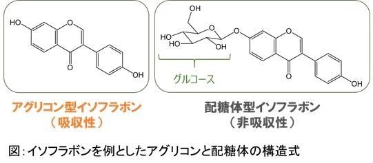 アグリコン及び配糖体型イソフラボン図.jpg