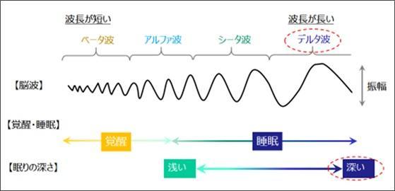 主な脳波の種類と睡眠との関係.jpg