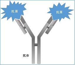 抗体・抗原.jpg